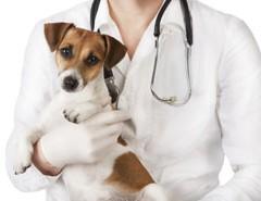 Kiszállna az állatgyógyászatból a Pfizer